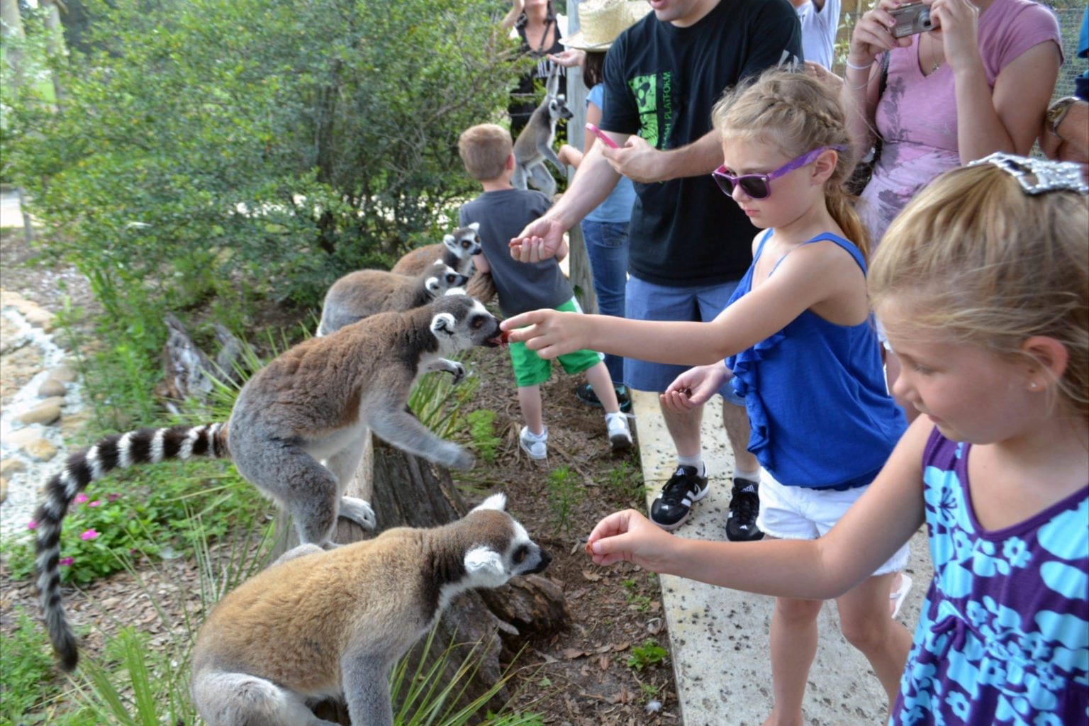 Tampa-bay-Family-Day-trips-Wilderness-Safari