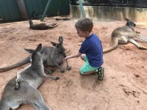 Animal Experiences in Tampa Bay