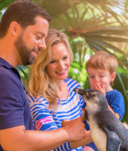 ZooTampa Penguin Animal Experiences in Tampa Bay