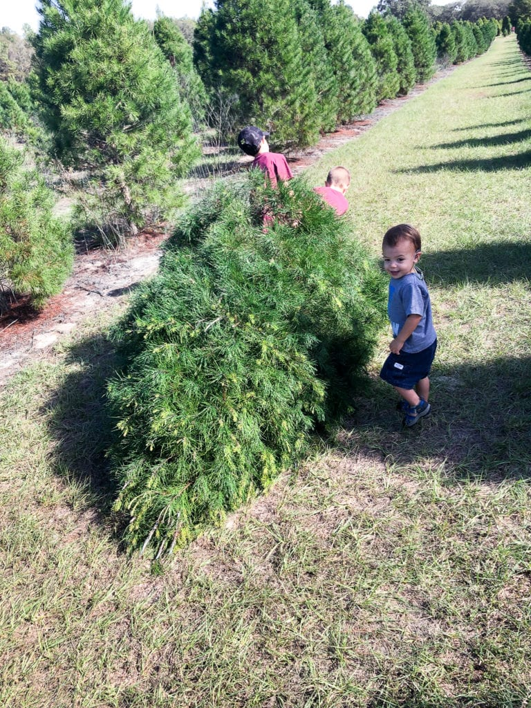 Cut your own Christmas Tree Ergle Tree Farm