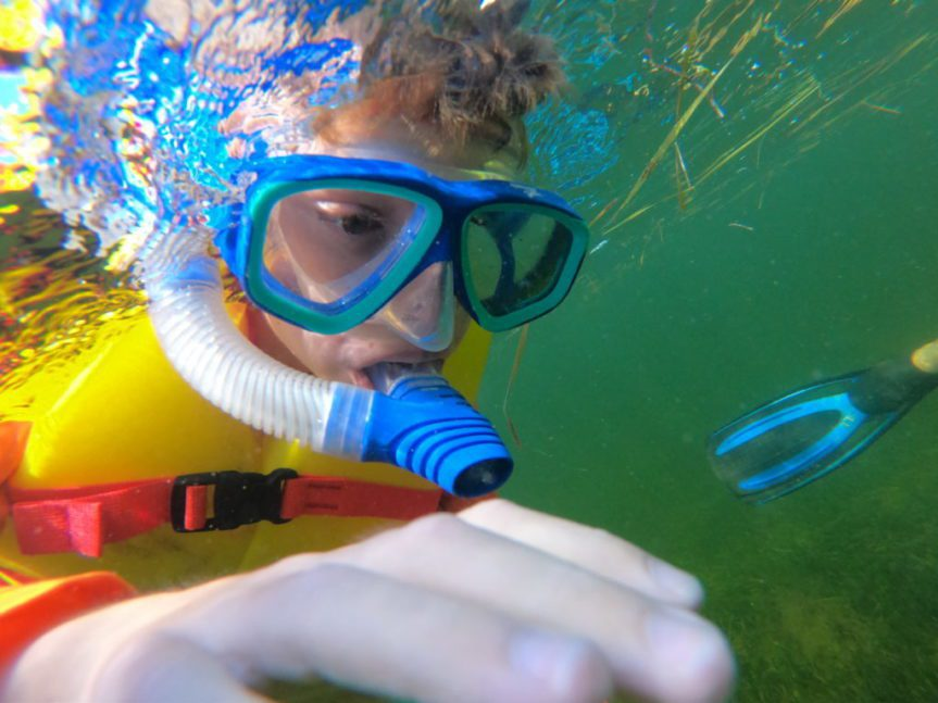 snorkel and scalloping